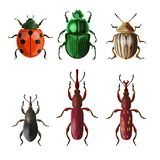 Agricultural insect pests vector illustration