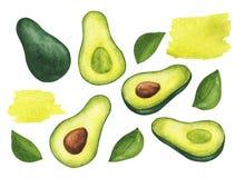 Set akwarela liście i avocados ilustracji