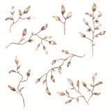 Set akwareli jesieni gałązki i liście Botaniczna klamerki sztuka kwieciści projektów dekoracyjni elementy Obrazy Royalty Free