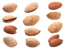 Set almond nut closeup Stock Photos