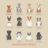 Set of american dogs Stock Photography