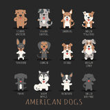 Set of american dogs Royalty Free Stock Images