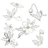 Set of anemones, flowers and leaves. Hand drawn Royalty Free Stock Image