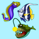 Set of anglerfish, eel, striped tropical fish. On blue background. Vector series of exotic fish characters Stock Photography