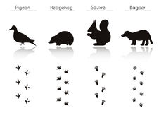 Set of Animal and Bird Trails with Name. Stock Images