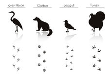Set of Animal and Bird Trails with Name.Vector Set of Black Fore Royalty Free Stock Photos