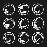 Set animal logos on a dark background. Eagle, rhinoceros, panther Stock Images