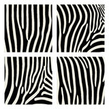 Set of animal pattern. Imitation print of skin of zebra. Black stripes on gray background. Stock Images