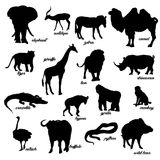 A set of animal silhouettes. Animals Safari. A set of animal silhouettes. Vector illustration Stock Photos