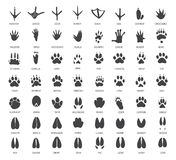 Set of animal tracks. Vector set of animal tracks Stock Photography