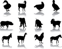 Set Animals Stock Photo