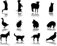 Set Animals Royalty Free Stock Photo