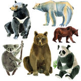 Set of animals bears. Watercolor illustration in white background. Royalty Free Stock Images