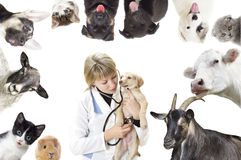 Set of  animals Stock Photo