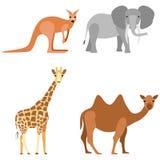 Set of animals: elephant, camel, giraffe, kangaroo Stock Image