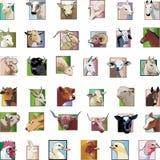 Set - animals from a farm stock photos