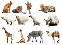 Set of  animals. Isolated with shadows Stock Photos
