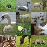 Set of 12 animals photos Stock Images