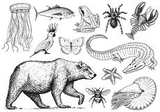 Set of animals. Reptile amphibian mammal insect. Bug Bear shell jellyfish crocodile butterfly fish lobster spider vector illustration