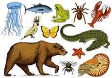 Set of animals. Reptile amphibian mammal insect. Bug Bear shell jellyfish crocodile butterfly fish lobster spider. Classification of wild creatures and biology Stock Photography