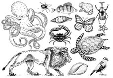Set of animals. Reptile and amphibian, mammal and insect, wild turtle. Engraved hand drawn. Old vintage sketch. Beetle stock illustration