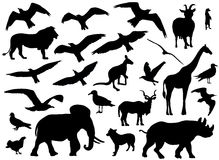 Set of animals silhouettes on white background. Vector illustration Royalty Free Stock Photos