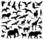 Set of animals silhouettes on white background. Vector illustration Royalty Free Stock Image