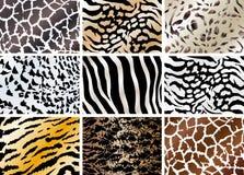 Set of animals skin backgrounds Stock Image
