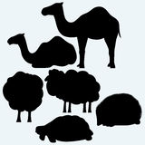 Set of animals. Turtle, camels, sheep and hedgehog. On blue background. Vector silhouettes Stock Image