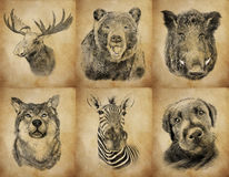 Set on animals on vintage background. Illustration in draw Stock Photography