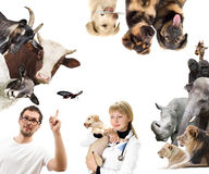 Set of Animals. On a white background Stock Photo