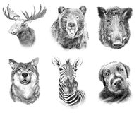 Set on animals on white  background. Illustration in draw Royalty Free Stock Photography