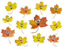 Set of animated maple leaves. Set of animated multicolored funny maple leaves on white background. Different emotions Royalty Free Stock Photography