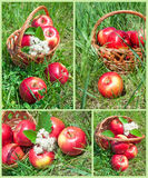 Set of apples in a basket Royalty Free Stock Photo