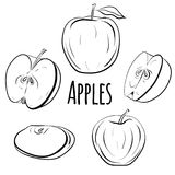 Set of apples of different shapes. Stock Photos
