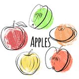 Set of apples of different shapes. Single and halves of apples with grunge colored dots. Stock Photography