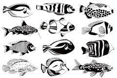 Set of aquarium fish. Black and white design. Vector illustration Stock Photo