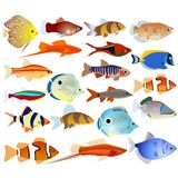 A set of aquarium fish Royalty Free Stock Photography