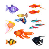 Set of aquarium fish. Realistic and fairytale underwater characters. Set of aquarium fish. Goldfish, Poecilia reticulata and carp, clownfish, neon marine pets Stock Image