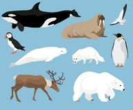 Set of arctic animals. Illustration in flat style, polar bear, penguin, reindeer, puffin and others vector illustration