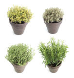 Set of aroma herbs Stock Images
