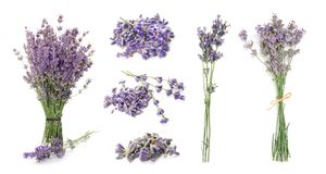 Set with aromatic fresh lavender. On white background stock images