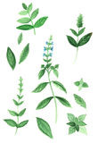 Set of aromatic herbs Royalty Free Stock Photography
