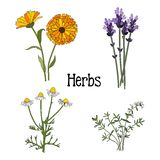 Set of aromatic herbs, isolated  illustration Royalty Free Stock Photography