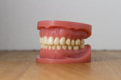 Set of artificial false teeth stock image