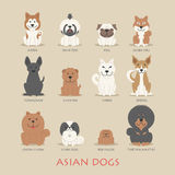 Set of asian dogs Stock Images
