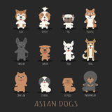 Set of asian dogs Stock Photos