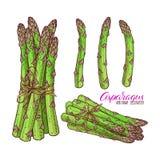 Set asparagus ilustracji
