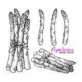 Set asparagus royalty ilustracja
