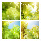 Set of assorted summer backgrounds Stock Photo